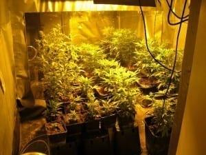 Aufnahme der im Kellerraum vorgefundenen Plantage. Foto: Polizei