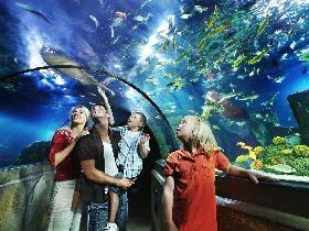 Insgesamt betreibt die Merlin Entertainments plc acht SEA LIFE Aquarien in Deutschland.