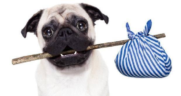 Hund Hund mit Beutel schaut mit großen Augen