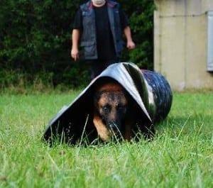 Rettungshunde OG Günzburg