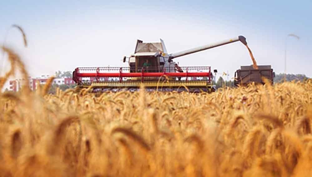 Combine-harvester pours wheat grain to trucks. Cloud blue sky. H