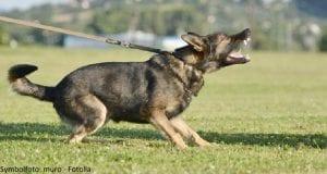 hund-beissen-muro-fotolia