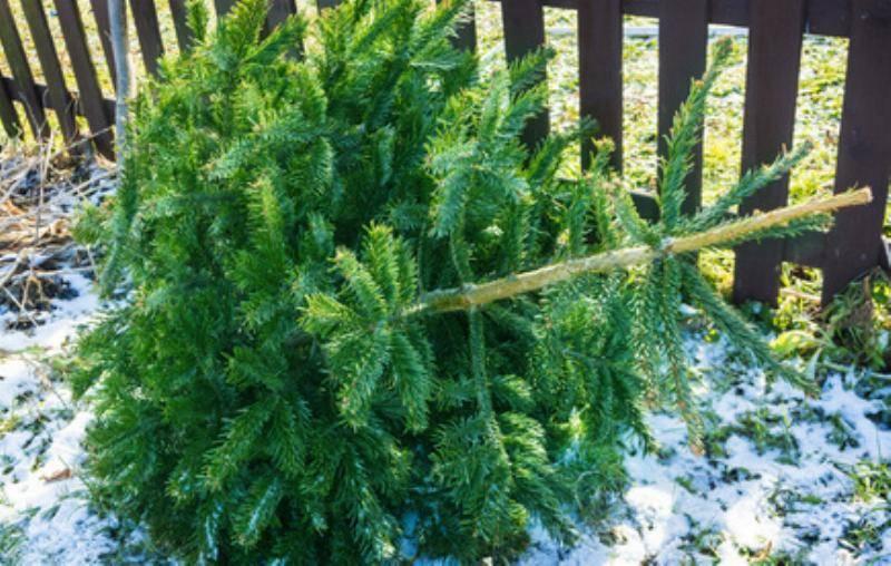 Weihnachtsbaum am Boden