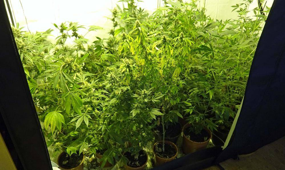 Marihuanaplantage in Kempten entdeckt