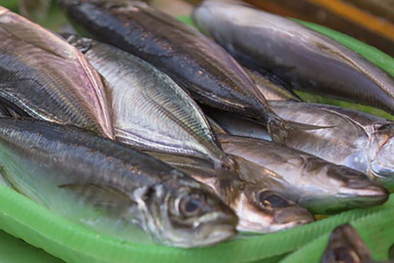Fische im Eimer