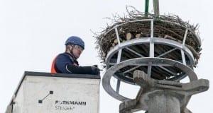 LVN sichert Storchennest in Ichenhausen – Artikelbild