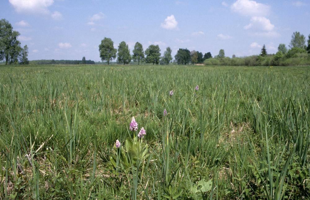 Regierung von Schwaben Natura 2000 Guenzburg