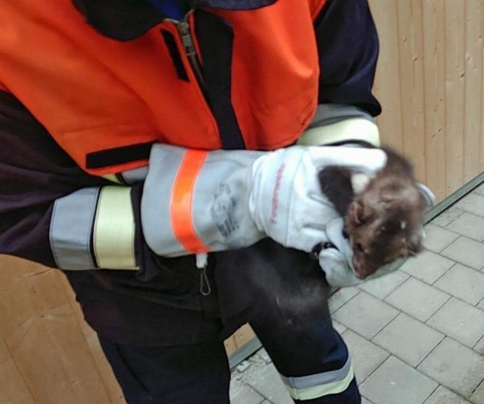 Marder befreit Senden Feuerwehr 2