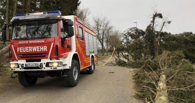 Feuerwehr Lauingen Baum 10022019