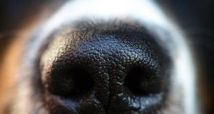 Hundeschnauze Hund