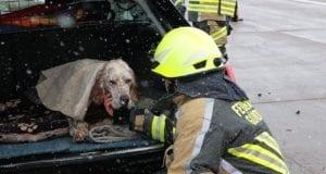 Unfall A8 Günzburg-Burgau Hund entlaufen 03022019 20