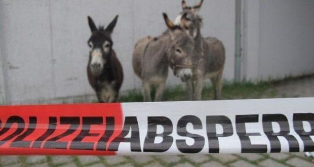 Polizei Lindenberg Esel
