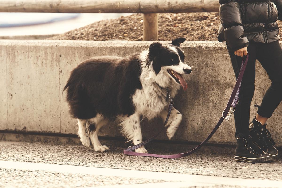 Gassi Hund