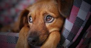 Hund Hündchen