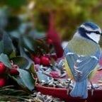 Vogel Vogelfutter