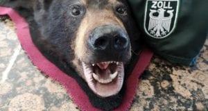 Zollamt Memmingen Bärenfell entdeckt