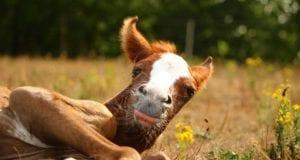 Pferd Fohlen