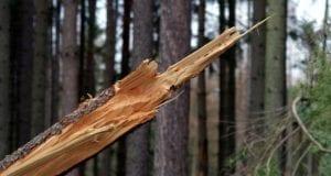Baum Sturm Sturmschaden