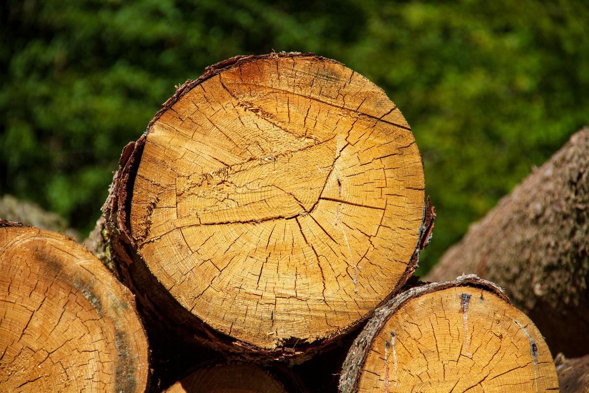Holz Baumstamm