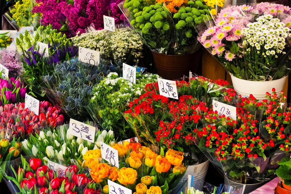 Blumen Verkauf Blkumenverkauf
