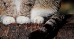 Katze Pfoten