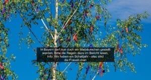 Kleinerer-Maibaum – Corona