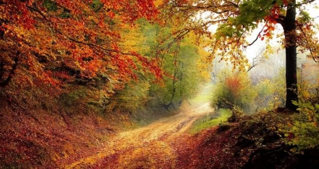 Wald Baeume