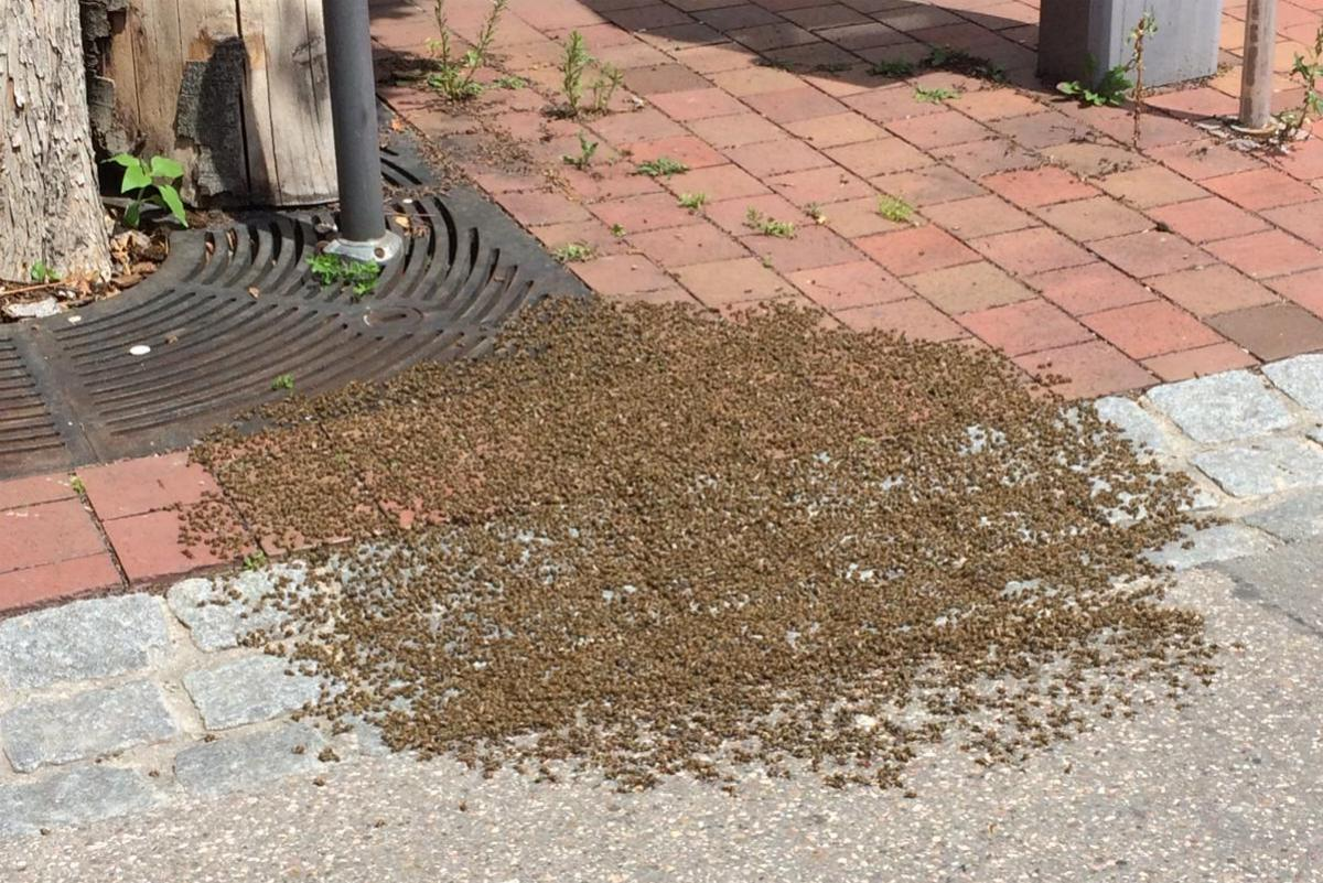Bienenvolk Donauwoerth
