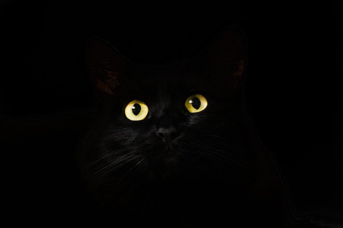 Katze Katzenaugen Auge