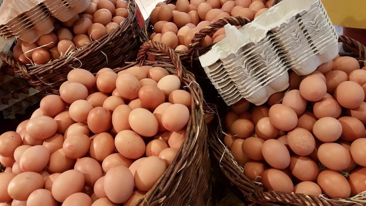 Viele Eier