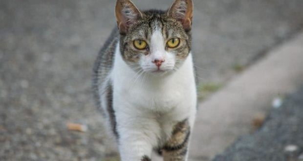Katze Fahrbahn