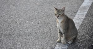 Katze Strasse
