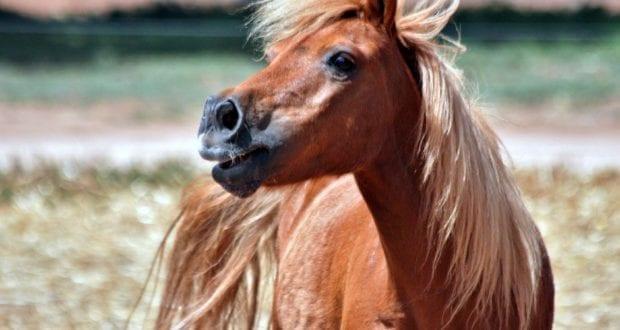 ein Pony