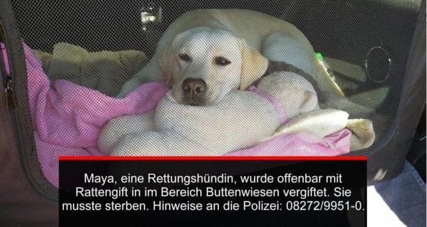 Maya Rettungshund BRK Augsburg Stadt vergiftet