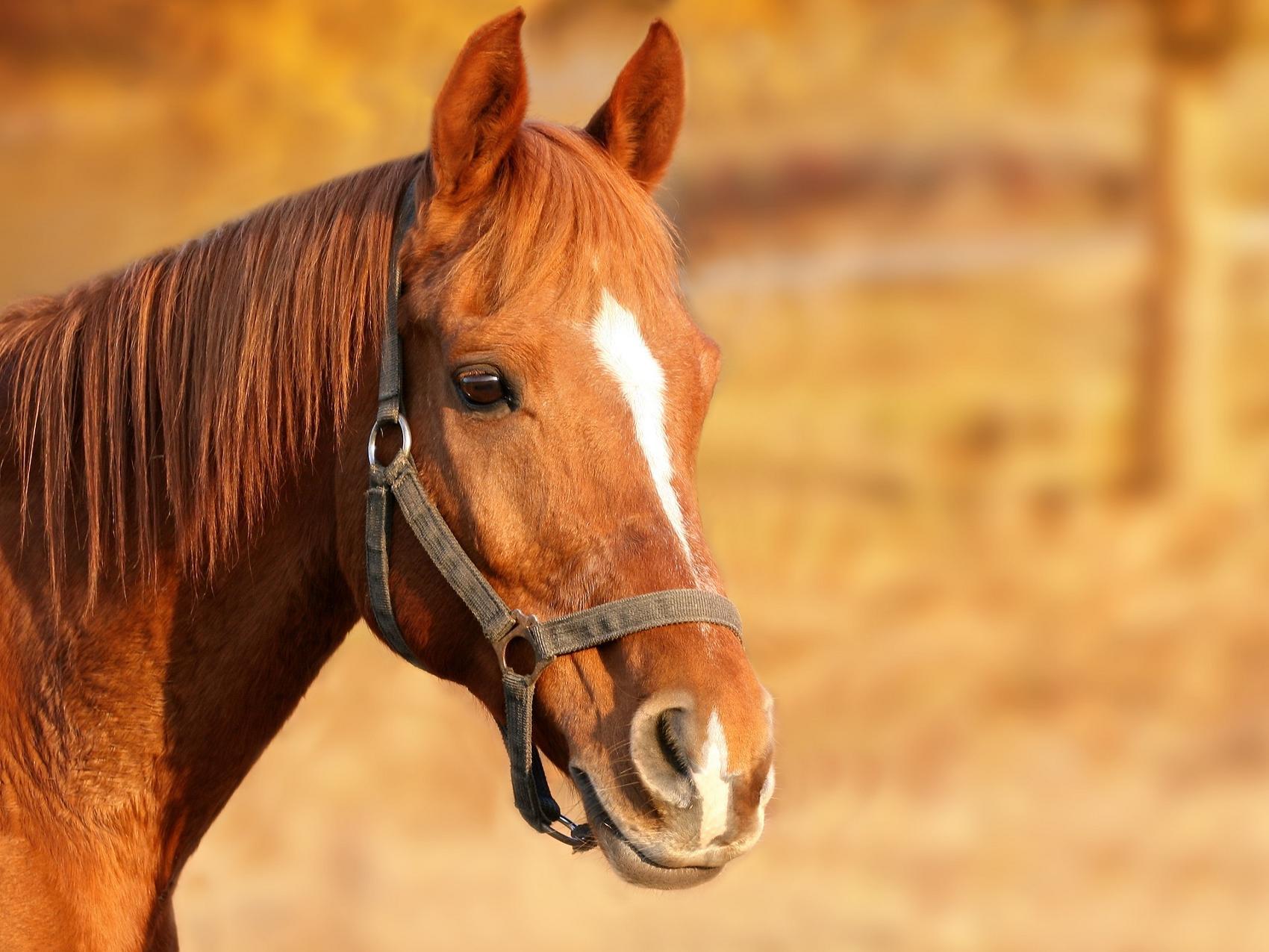 Pferd Pferde