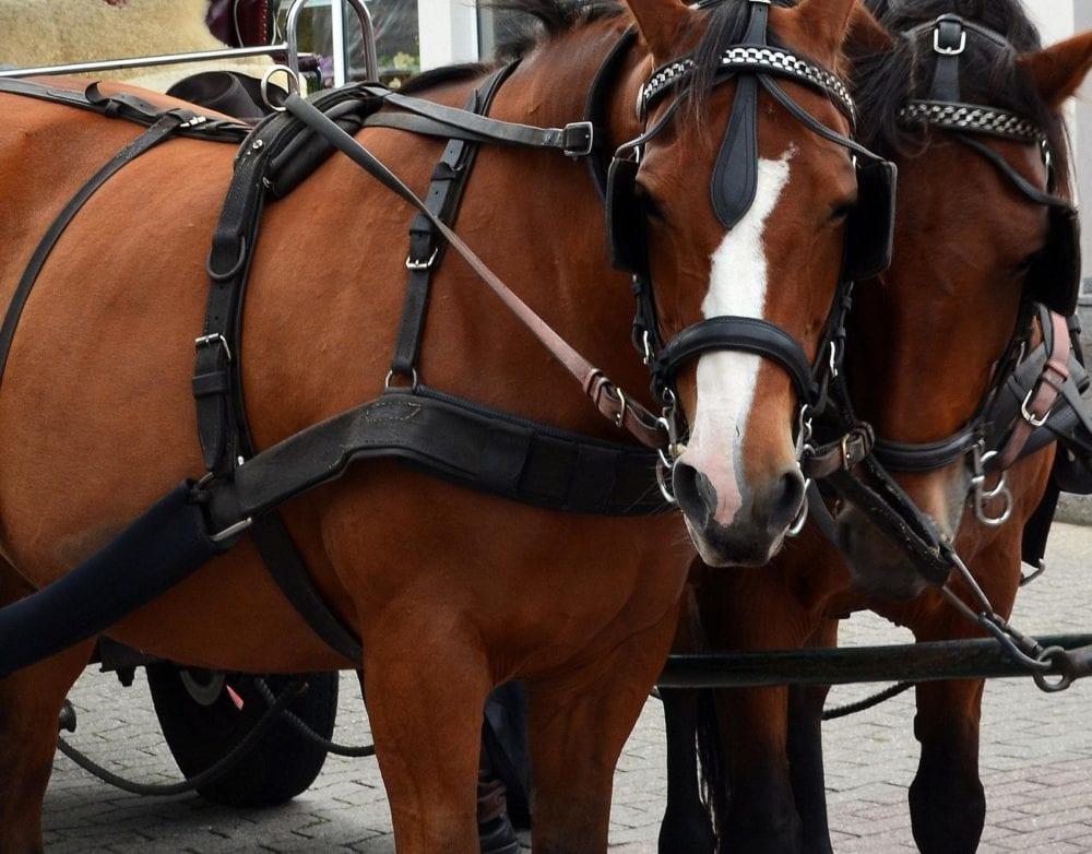 Pferde Kutsche