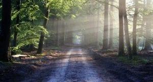 Wald Waldgebiet