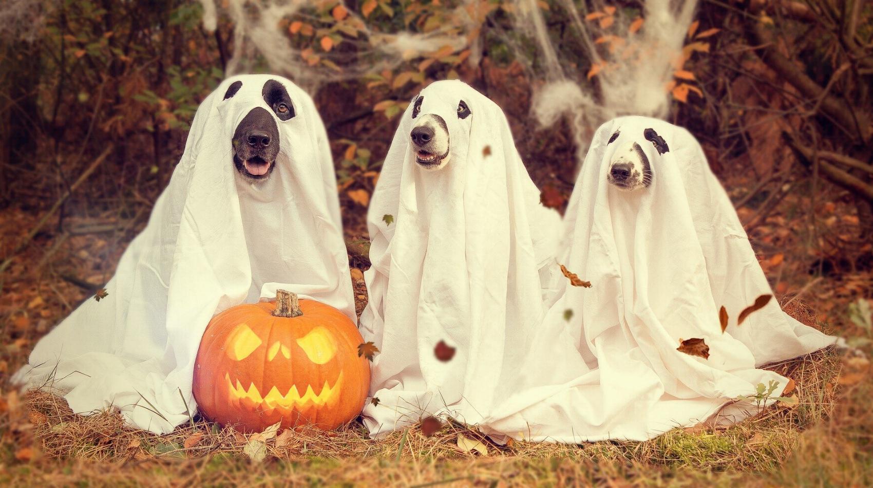 Halloween Hund
