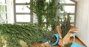 Marihuana Drogen BTM Kirchheim