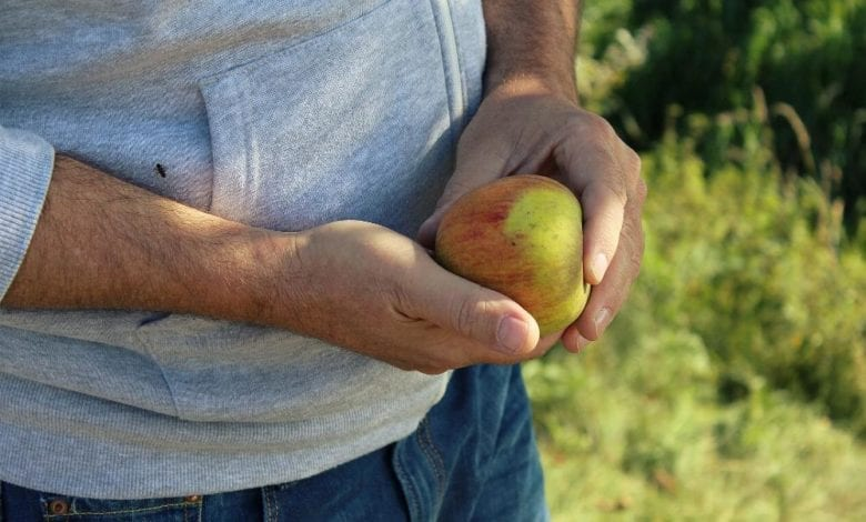 Apfel Hand