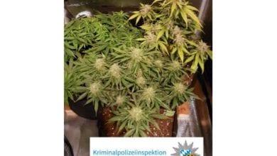 Rieden Ichenhausen Cannabis Durchsuchung